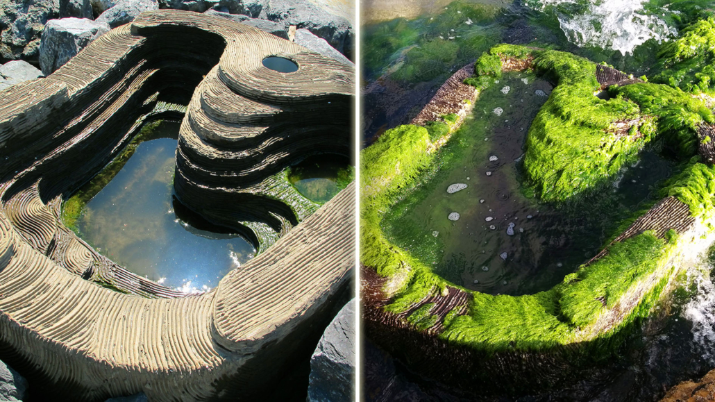 Before and After Econcrete tidal pools