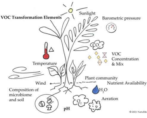 VOC Transformation Elements